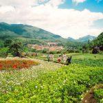 Núi Hàm Rồng – Điểm đến hấp dẫn bậc nhất Sa Pa